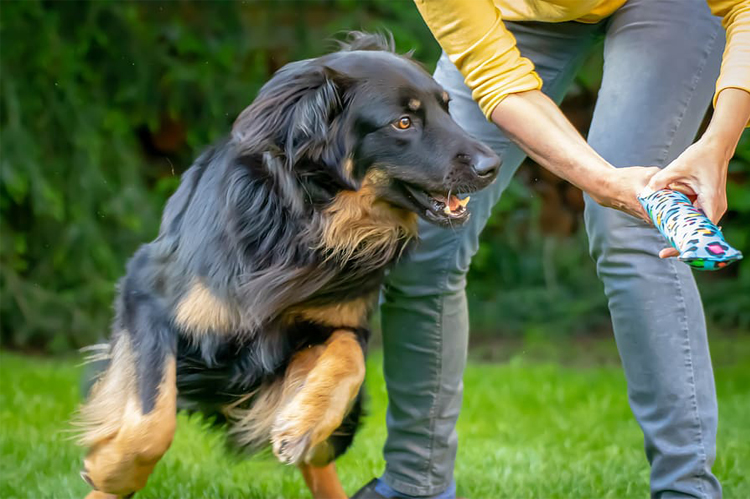 Ideas to Stop Your Dog Getting Bored