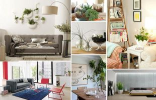Why You Should Decorate With Houseplants