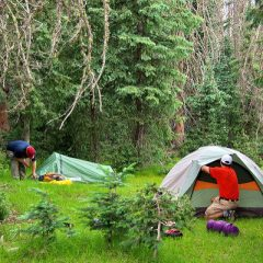 How to Prepare for Your First Camping Trip with the Family