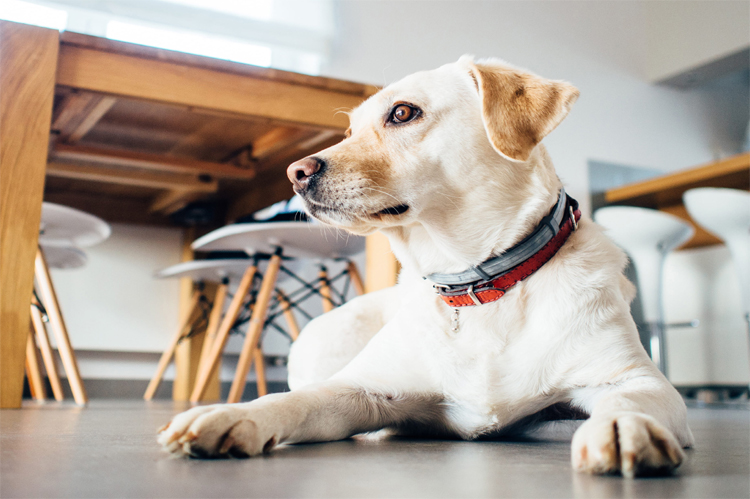pets to adjust to a new home