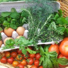 How to Garden for Effective Weight Loss: Fitness and Nutrition