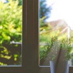 Pest Control: How to Get Rid of Common Houseplant Bugs?