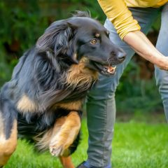 5 Enrichment Ideas to Stop Your Dog Getting Bored