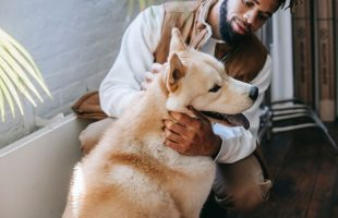 You Can Now Find a Free Place to Stay! Trusted House Sitters Make Vacations Easy for Pet Lovers