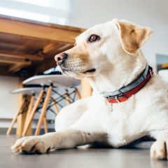 5 Tips for Getting your Pets to Adjust to a New Home