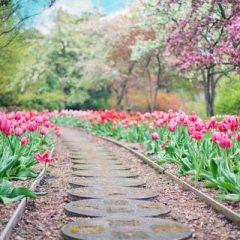 Drought-Resistant Plants for Your Urban Garden