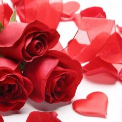 Meanings and Symbolism of Different Rose Flowers In Our Life